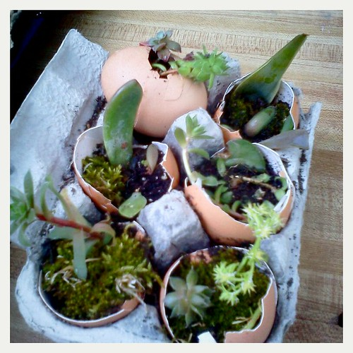 succulent six pack by Jessica Baumann