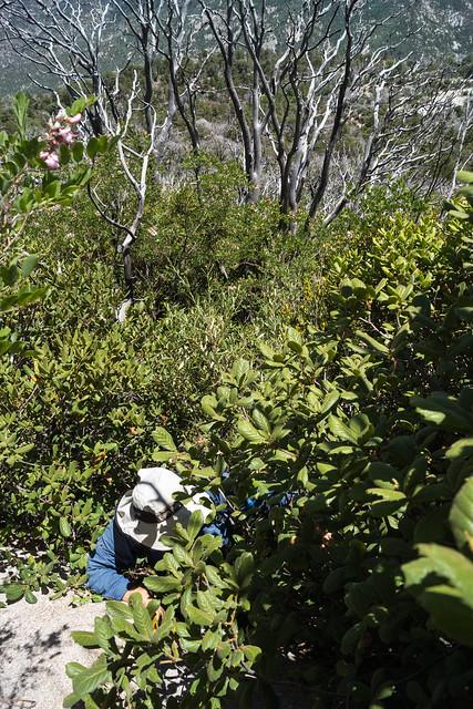 1306 Below Samaniego Peak