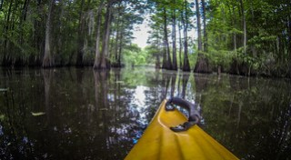 Canoe Cut