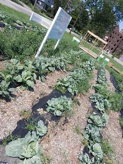 gardens 004