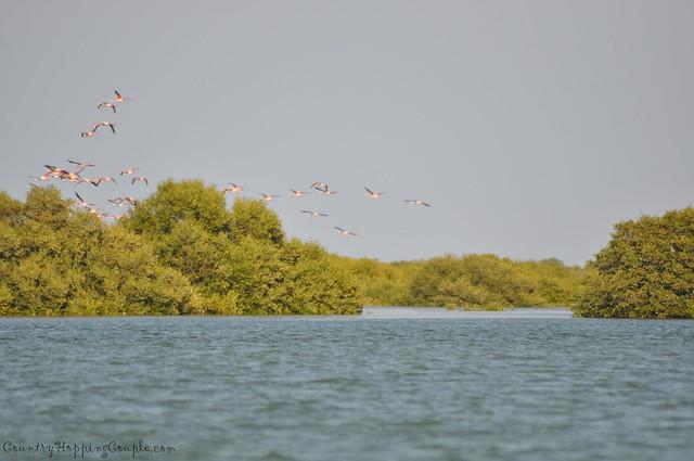 Bird Watching Um Al Quwain 7