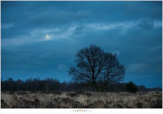 De maan kijkt nog even tussen de wolken door.