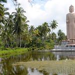 16 Viajefilos en Sri Lanka. Bentota 08