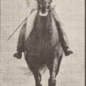 Horse Buckskin walking, lame right front foot, with rider (rbm-QP301M8-1887-654b~8).