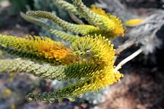 flower at Botanic Garden
