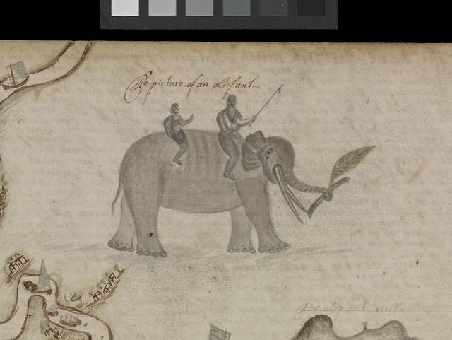 Barlow journal, leaf116, detail of elephant. JOD/4