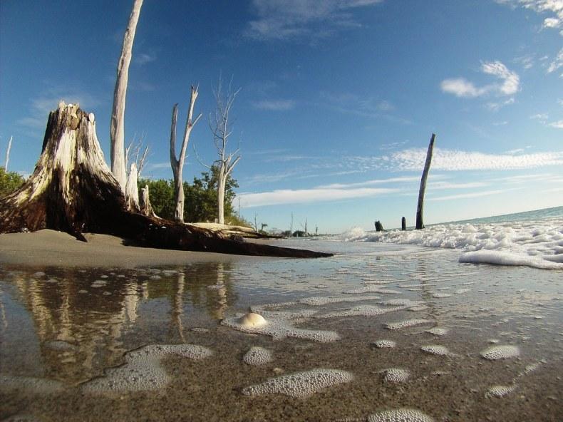 Shell Trees at Stump Pass Beach State Park, Englewood, Fla., Jan. 18, 2015