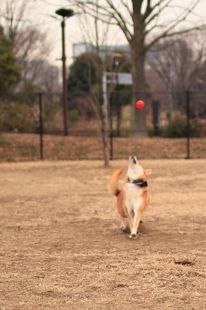 01_14_dog_run_0033
