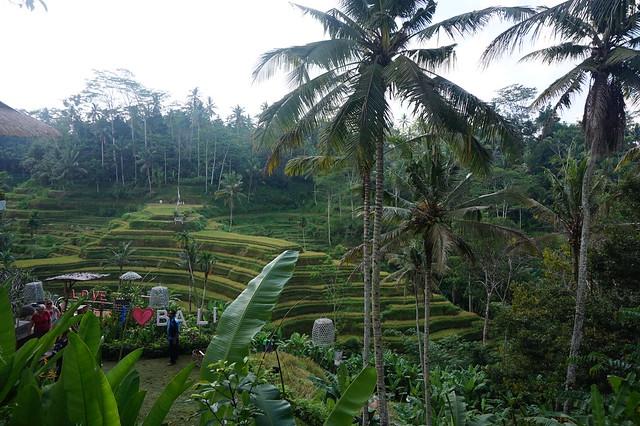 terrazas arroz en Bali