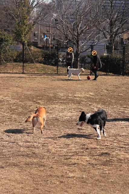 01_14_dog_run_0015