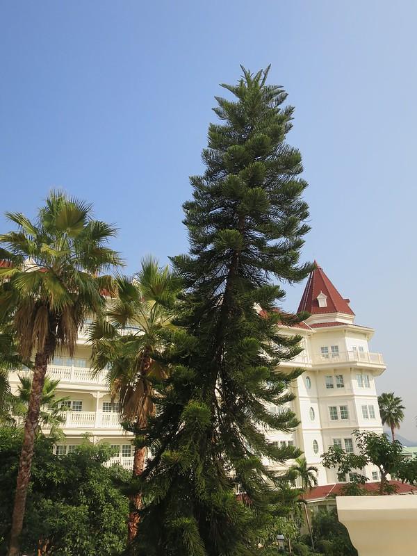 HK Disneyland Hotel lawn