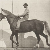 Horse Buckskin walking, lame right front foot, with rider (rbm-QP301M8-1887-654a~2).