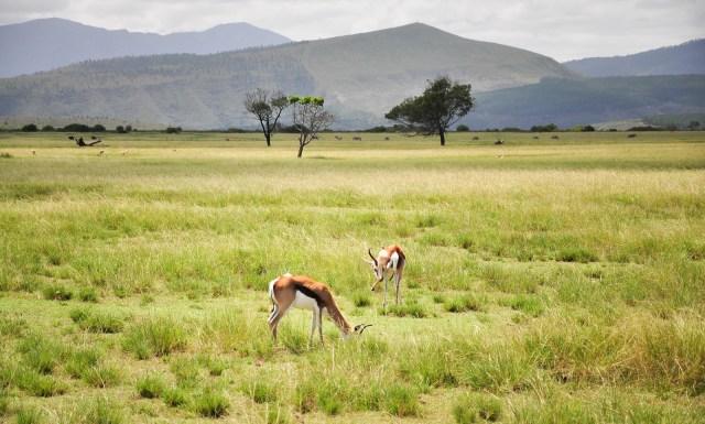 20140221-Etelä-Afrikka 2014 150