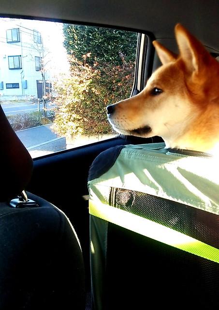 01_14_dog_run_0001