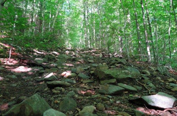 Signal Ridge Trail Climb