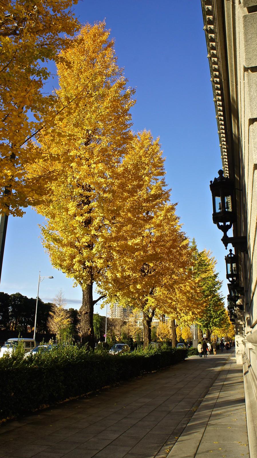 Marunouchi in autumn