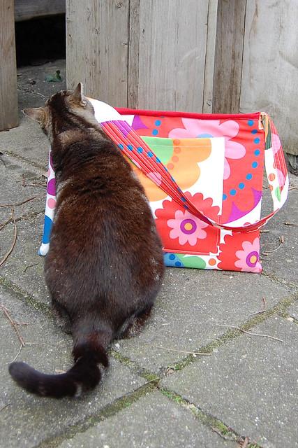 cat intervention