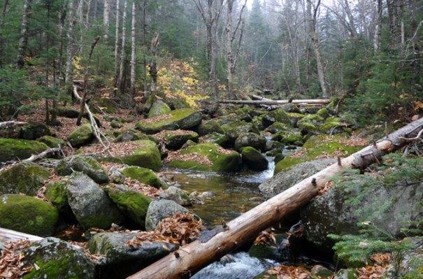 First Grafton Loop Brook