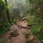 12 Viajefilos en Sri Lanka. Nuwara Eliya 28