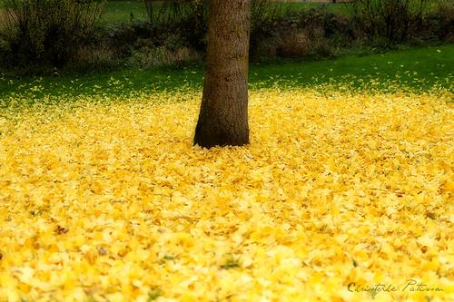 Feuilles jaunes de l'automne