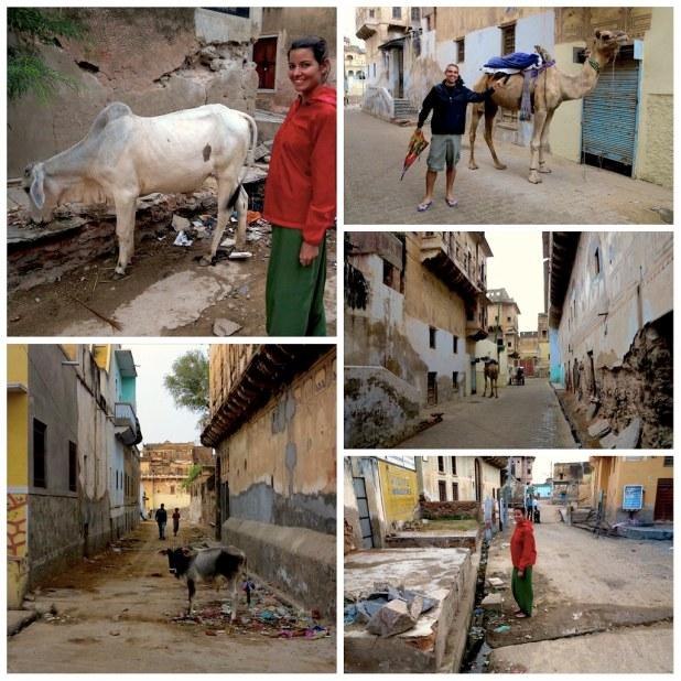 Mandawa animales calle India