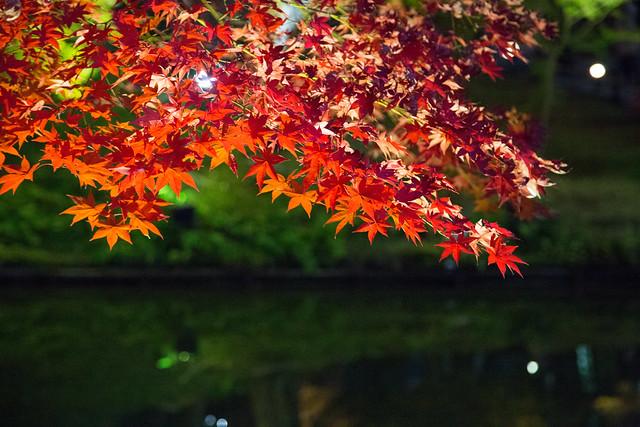 kyoto Red leaves 高台寺の炎