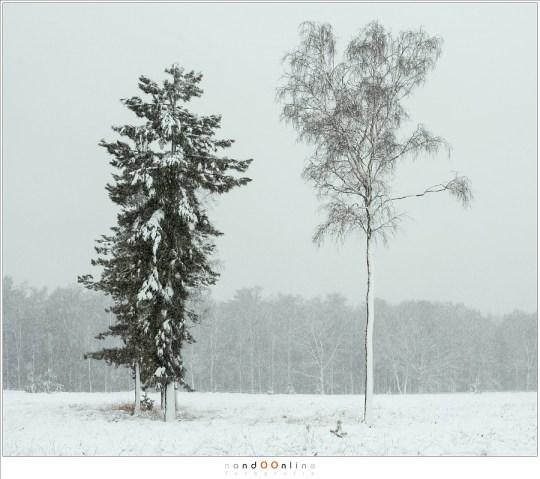 Een bijzonder soort silhouet ontstaat in een sneeuwbui met veel wind