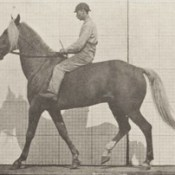 Horse Buckskin walking, lame right front foot, with rider (rbm-QP301M8-1887-654a~9).