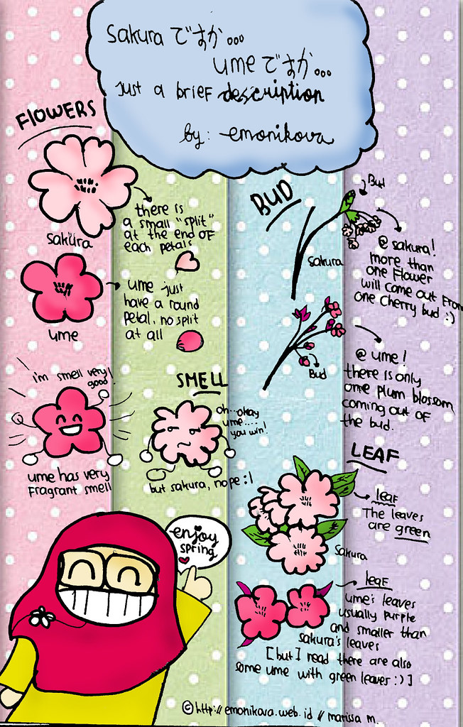 ume vs sakura