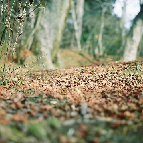 Rolleiflex_02_09