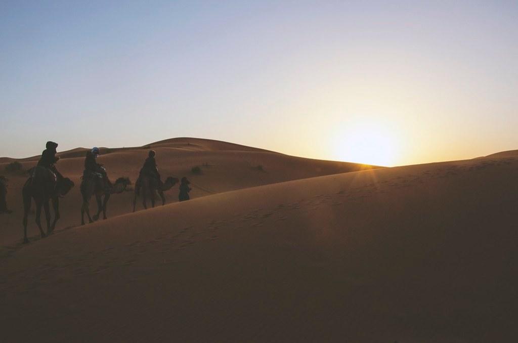 Foto gratis de nómadas en camello por el desierto