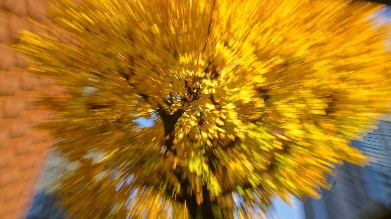 intentional camera movement for Marunouchi autumn