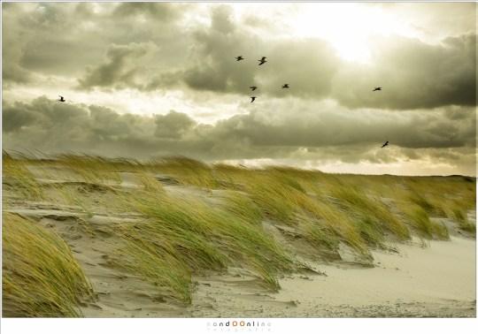 Zon, zee, strand en een heel harde wind