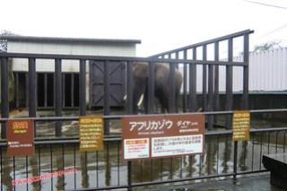 CIMG1158 Pobre elefante en el Infierno Yama Jigoku (Beppu) 13-07-2010 copia