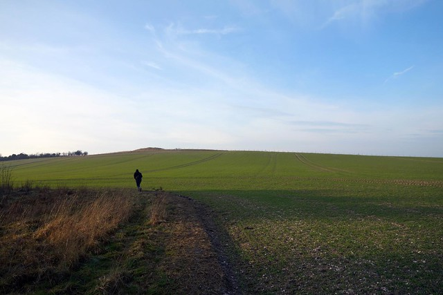 Chilterns, Jan 2015