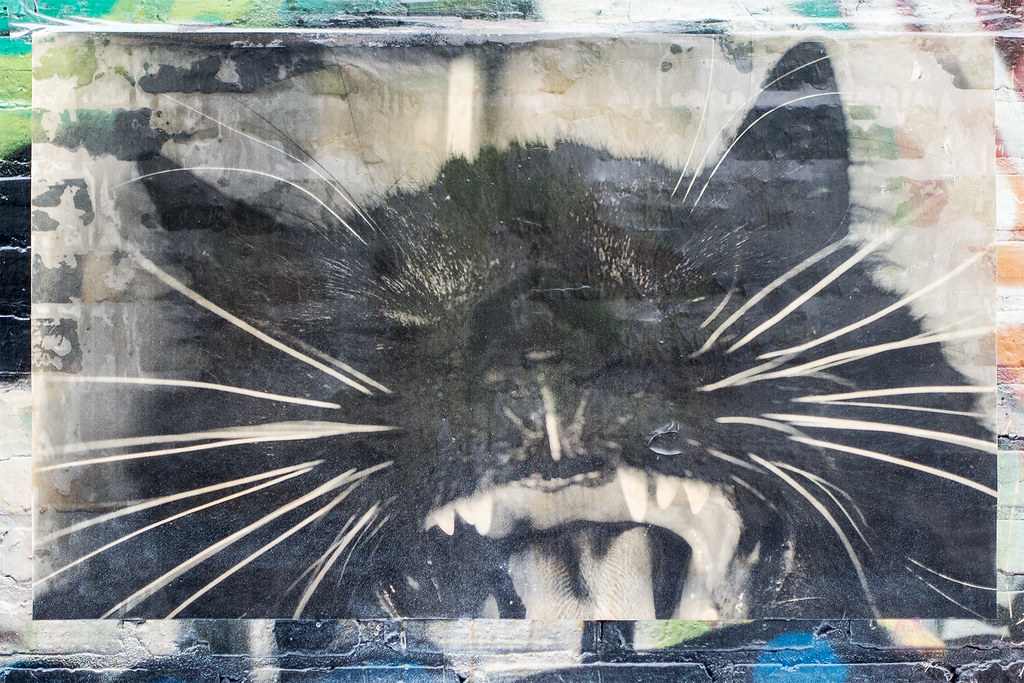 Cat - Wheatpaste