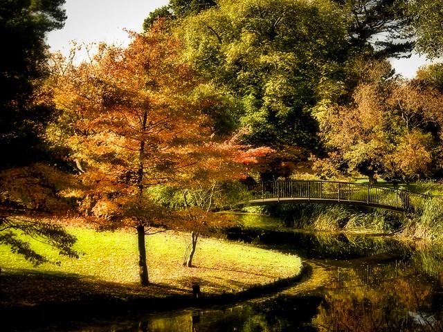Autumn Light - Syon Park Gardens London