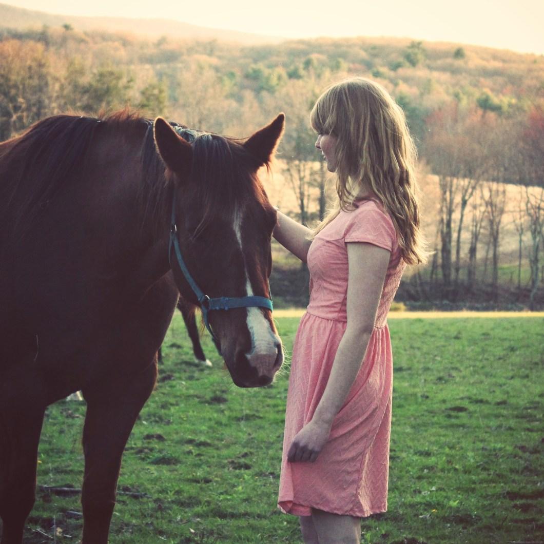 foto de caballo marrón
