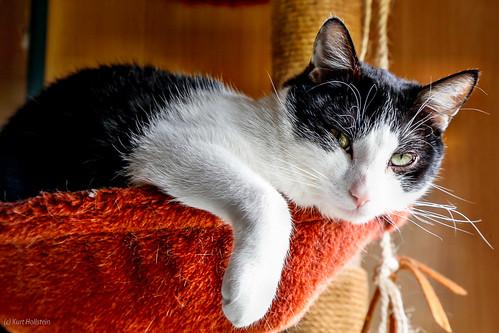 Cat Lucky