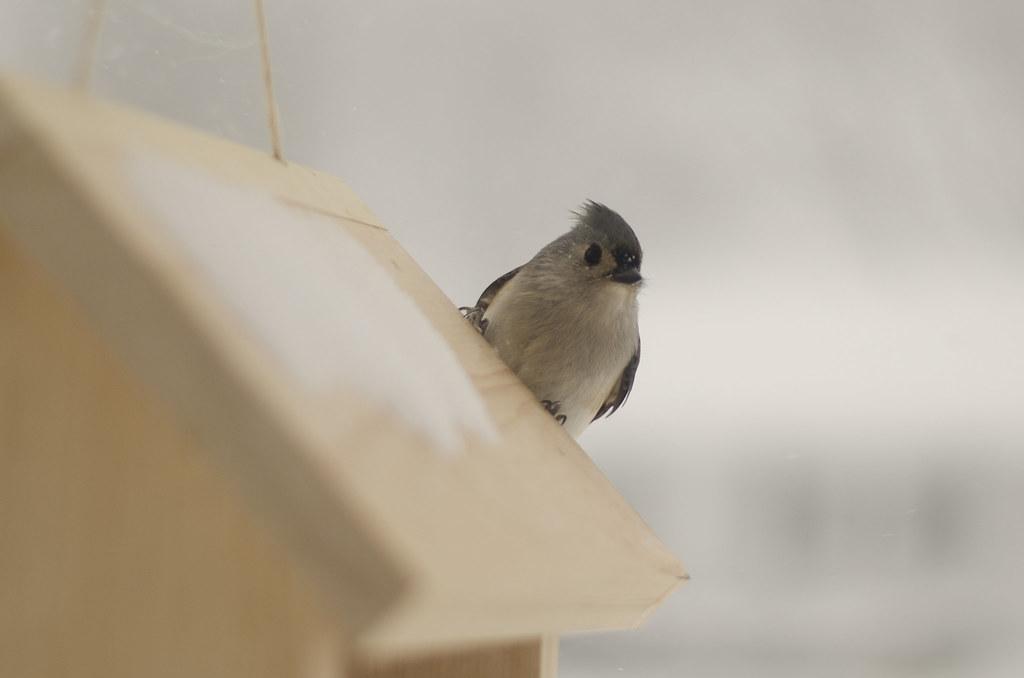 friend to the birds 4