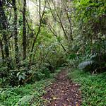 01 Viajfilos en Panama. Sendero Quetzal 32