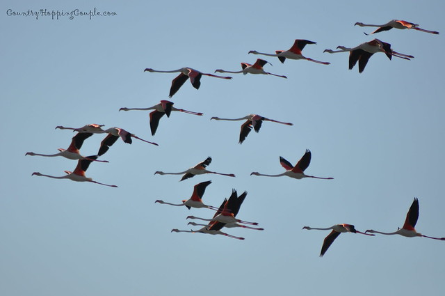 Bird Watching Um Al Quwain 2
