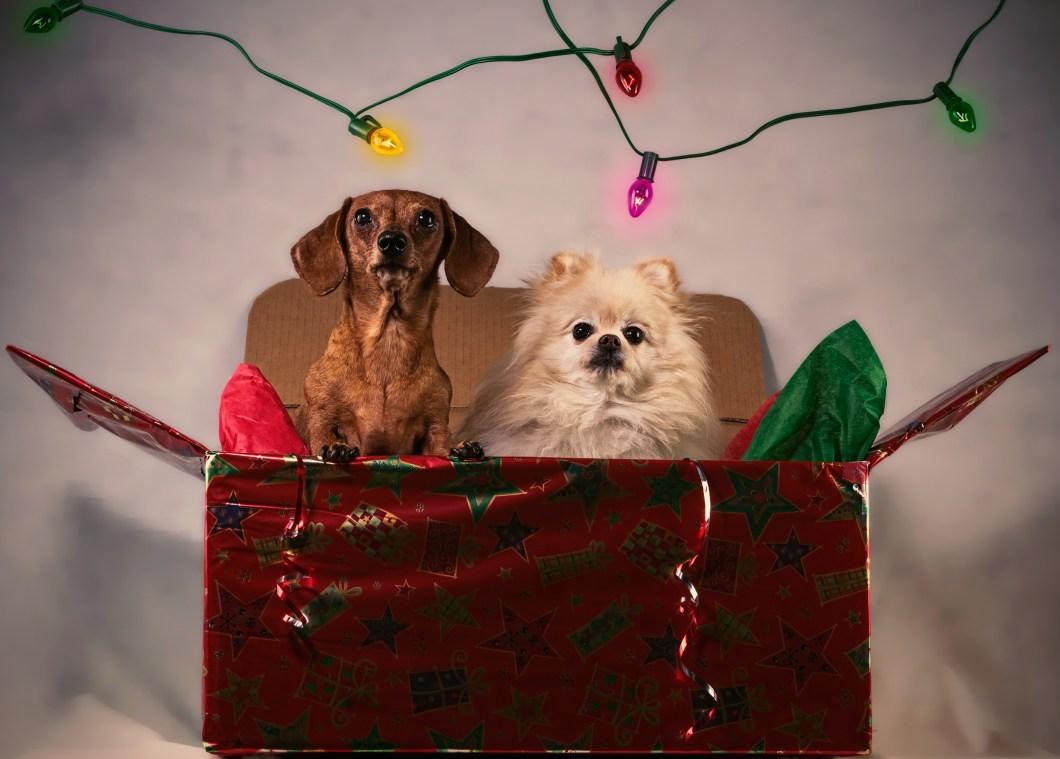 Imagen de dos perros de fiesta en navidad