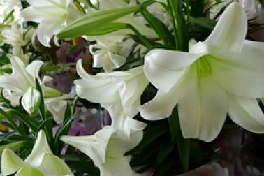 Spring Safety Tips for Cats - Easter Lily
