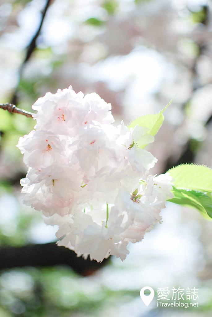 大阪造币局 樱花 51
