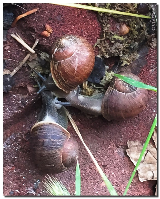 Snail Convention
