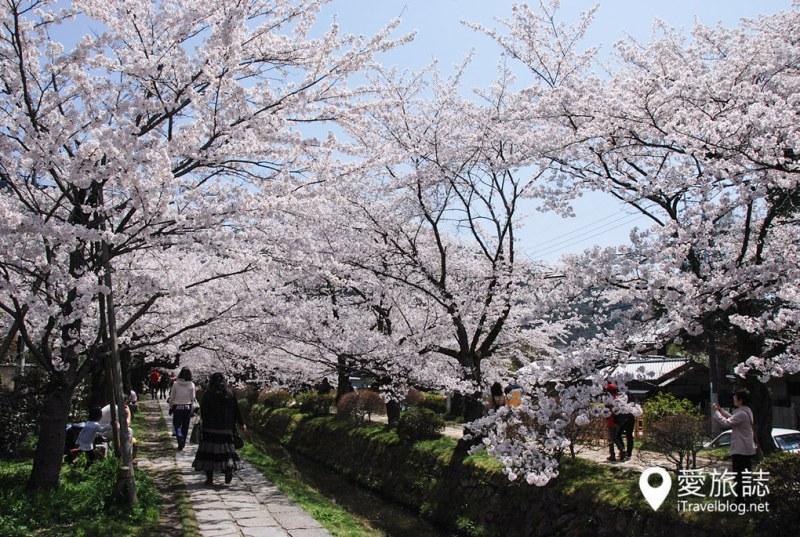 京都赏樱景点 哲学之道 43
