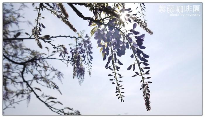 紫藤咖啡園 06