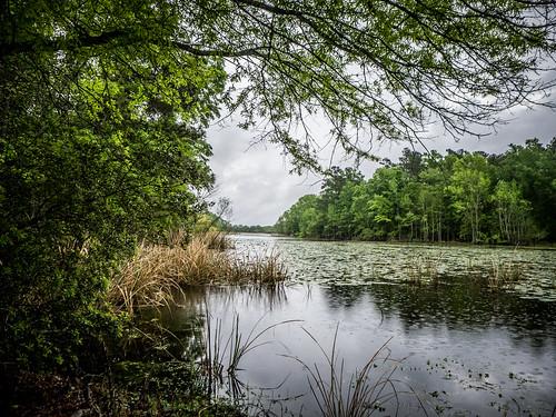 Lake Marion Plantation Islands-14