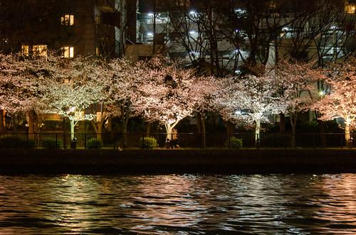 夜桜クルーズ-8.jpg